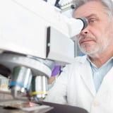 Älterer Wissenschaftler, der im Labor microscoping ist Stockfotografie