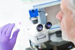 Älterer Wissenschaftler, der im Labor microscoping ist Stockbilder