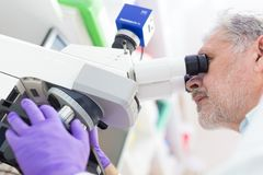 Älterer Wissenschaftler, der im Labor microscoping ist Lizenzfreies Stockbild