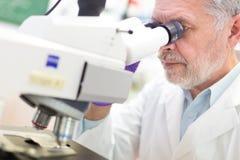 Älterer Wissenschaftler, der im Labor microscoping ist Stockbild