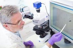 Älterer Wissenschaftler, der im Labor microscoping ist Lizenzfreie Stockfotografie