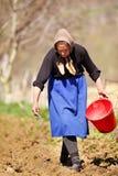 Älteres Frauenlandwirtsäen Stockbild
