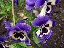 Älva i blomman Arkivfoto
