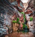 Älvasvalg som är djup i Grand Canyon fotografering för bildbyråer