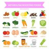 Ämnesomsättning som startar foods, grafisk mat för information, grönsak, frukt Arkivbild