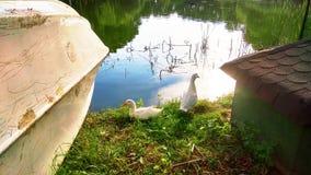 Änder bredvid sjön Royaltyfria Foton