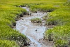 Änder i en Muddy Stream Fotografering för Bildbyråer