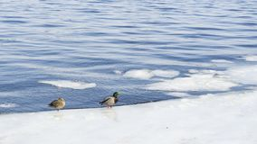 Änder i iskallt väder för vatten in fine Royaltyfri Bild