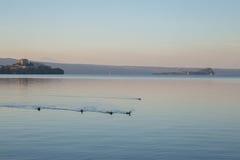 Änder i sjön Bolsena arkivfoto