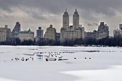 Änder i vinter Royaltyfri Fotografi