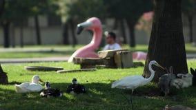 Änder, kaniner, en häger och en rosa flamingo lager videofilmer
