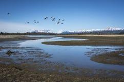 Änder nära Salmon River arkivfoto