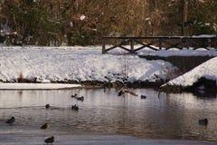 Änder och fåglar i ett iskallt vatten - Frankrike Arkivbilder