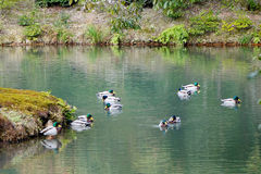 Änder på dammet på den Kinkaku templet i Kyoto, Japan Royaltyfri Foto