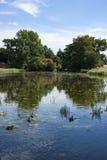 Änder på en lake Royaltyfria Foton