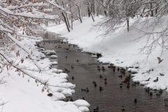 Änder på en vinterflod Royaltyfri Bild