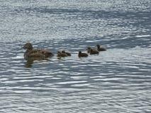 Änder på lagun Royaltyfria Bilder