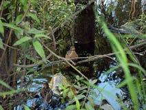Änder på laken Royaltyfria Foton