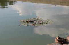 Änder på sjön på den Schönbrunn slotten fotografering för bildbyråer