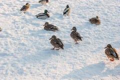 Änder på snö Royaltyfri Bild