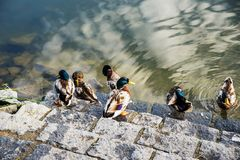 Änder på trappa vid vatten Arkivfoton
