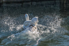Änder på vatten 3 Arkivfoto