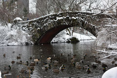 Änder som simmar i sjön i Central Park under snön, stormar Niko Manhattan, New York City Arkivfoto