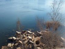 Änder som simmar på sjön fotografering för bildbyråer