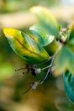 Ändernde Blätter Stockfotografie