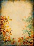 Ändernde Blätter Stockbild