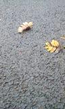 Ändernde Fallblätter im Boden stockfotografie