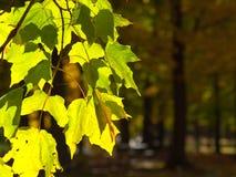 Ändernde Farben Lizenzfreie Stockfotografie