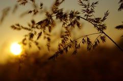 Änderungen am Objektprogramm der Leuchte auf einem Gras Lizenzfreie Stockfotografie