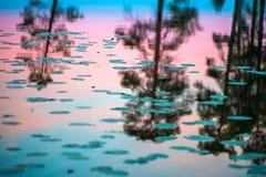 Ändlös polar dag i arktisken En härlig reflexion av den rosa natthimlen och träd i ett glansigt vatten av sjön arkivbild