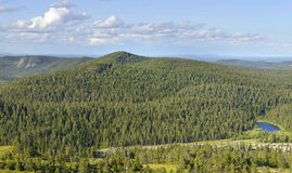 Ändlös skog royaltyfri bild