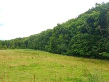 ändlös skog Arkivfoton