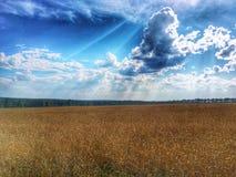 ändlösa fält Arkivbilder
