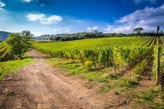 Ändlösa fält av vinrankor i Tuscany Royaltyfria Foton