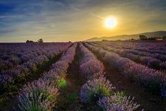 Ändlösa härliga lavendelfält som omges av berg på solnedgång 3 Arkivbild
