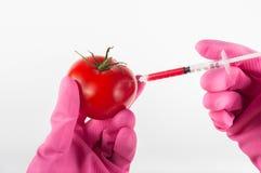 Ändrad tomat Arkivbild