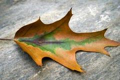 ändrande leaf Arkivfoto