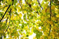 ändrande leaves Royaltyfri Fotografi