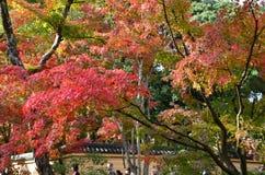 Ändring Japan för Kinkakuji sidafärg fotografering för bildbyråer