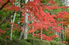 Ändring Japan för röd färg för höst royaltyfri bild