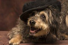 Ändrings-hund Royaltyfria Foton