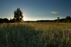 äng över solnedgång Arkivbild