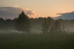 äng över solnedgång Royaltyfria Bilder