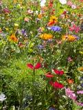 Äng av färgglade lösa sommarblommor Fotografering för Bildbyråer