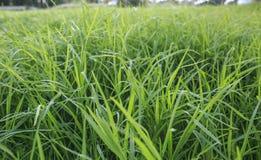Äng av gräs Arkivfoton