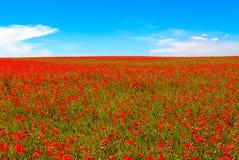 Äng av röda vallmo mot blå himmel royaltyfri bild